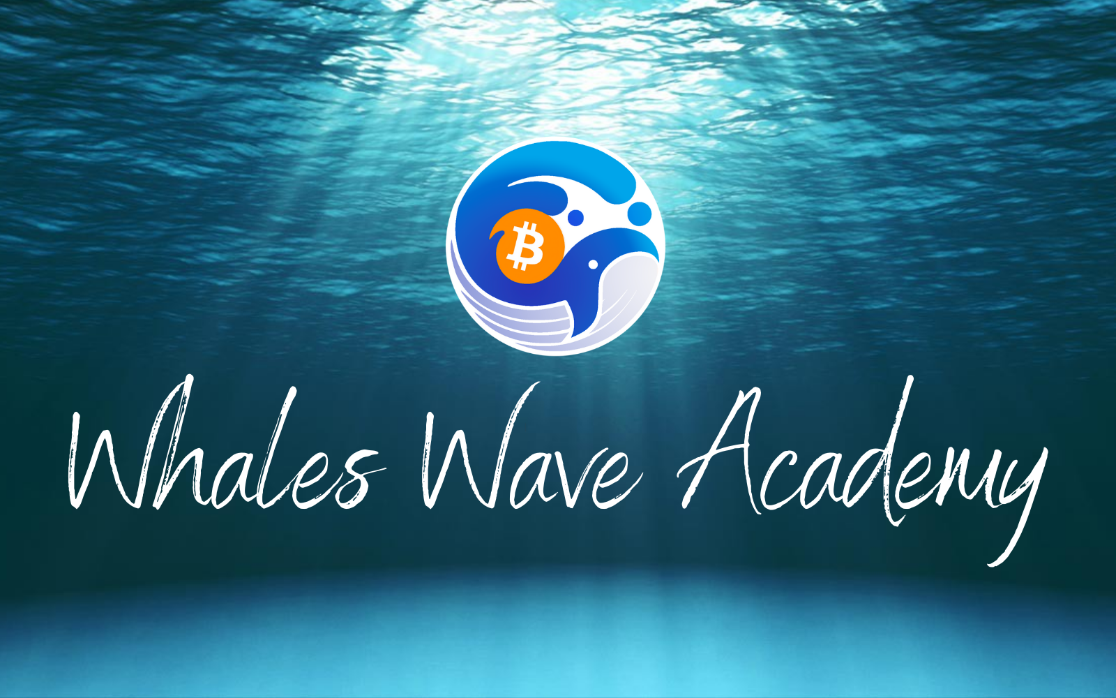 Programme Whales Wave Academy